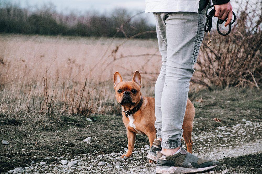 Pourquoi doit-on promener son chien ?