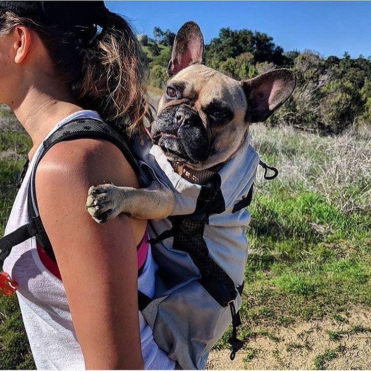Sac à dos pour chien Bouledogue