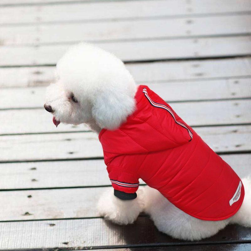 Veste manteau pour chien petite taille